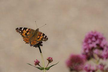 Kleine vos (vlinder) op een bloem van