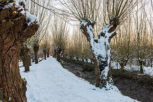 Besneeuwd pad tussen de wilgen
