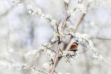 Schmetterling Frühlingsimpression von Jürgen Schmittdiel Photography