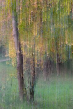 herfstbos van Karin Berger