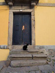 Kat voor een blauwe deur in Porto van Sofie Duchateau