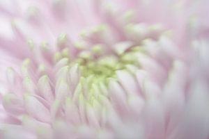 bloem van