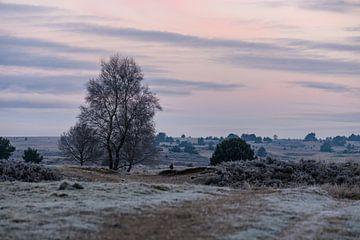 roze lucht boven Rozendaal van Tania Perneel