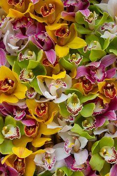 Een en al orchideeën van Mariëlle Verhoef
