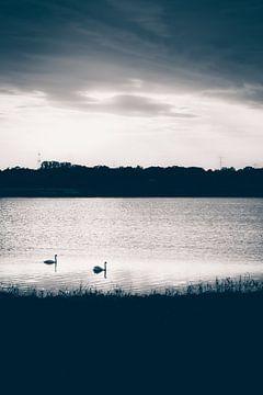 Zwei Schwäne im Wasser bei Sonnenuntergang von ElkeS Fotografie