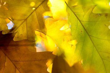 Herfst in blad van Marieke van der Doef