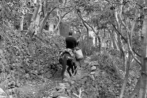 Werkpaard in de bergen van