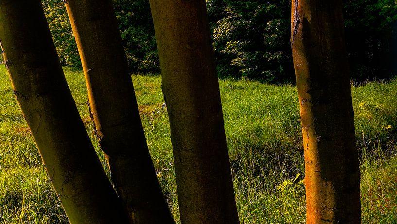 Landscape Wood and Springfield  van Jenny Heß