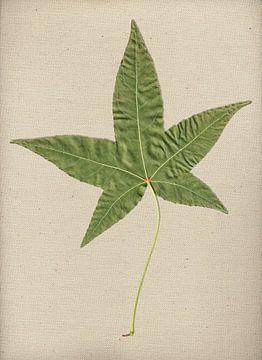 Blad van een Amberboom op canvas van Sven Wildschut