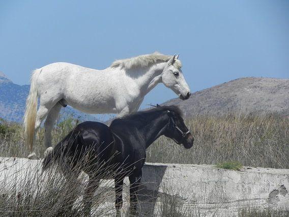 Paarden in de vrije natuur