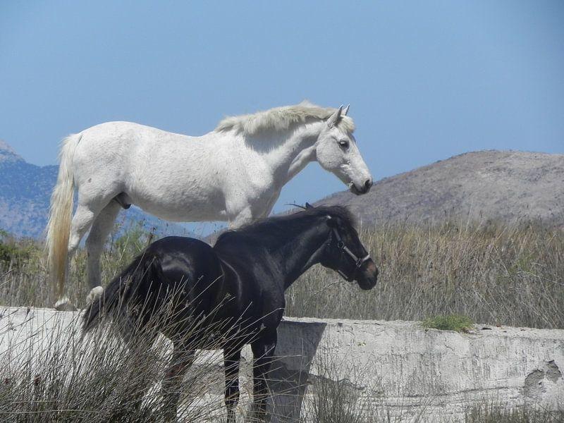 Paarden in de vrije natuur van Ingrid Van Maurik