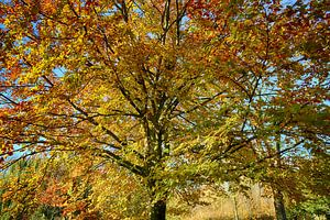 Boom in Herfst kleuren van FotoGraaG Hanneke