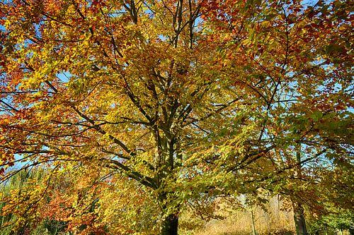 Boom in Herfst kleuren
