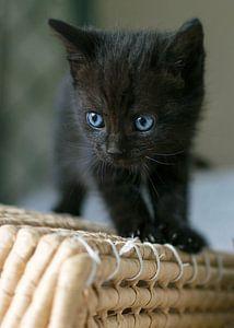 Kitten boven op rieten mand van