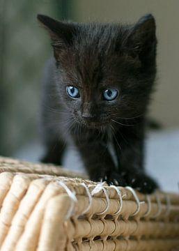 Kitten boven op rieten mand van Christa Thieme-Krus