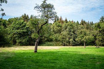 Landschaft mit Baum in der Mitte von Jaap Mulder