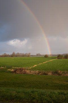 Regenboog van Moetwil en van Dijk - Fotografie