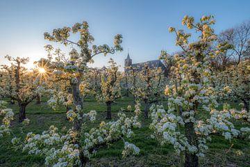 Kerk tussen zonnige fruitboomgaard von Moetwil en van Dijk - Fotografie