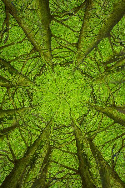 Mandala-Bäume (2) von Mark Scheper