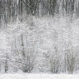 De eerste sneeuw van 2021. van Ton Drijfhamer