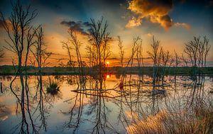 dood hout reflecties van