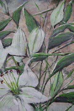 Lilien - Ausschnitt 1 von Susanne A. Pasquay