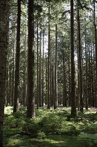 Rij met bomen van simone swart