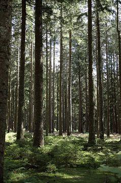 Reihe von Bäumen von simone swart