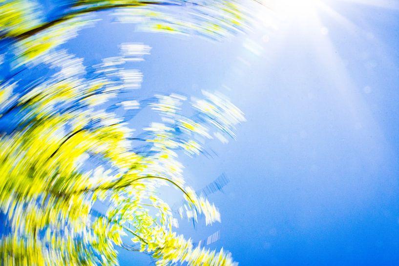 daytrails - zon - boom - draaien - abstracte kunst van Sven Van Santvliet