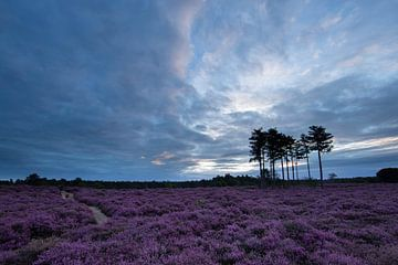 Heideveld Utrechtse heuvelrug Leusden Amersfoort von Peter Haastrecht, van