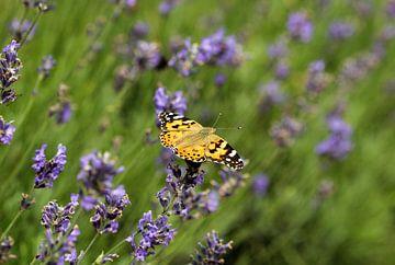 Distelvlinder op Lavendel van Martin Smit