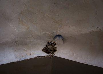 Een zwaluwnestje in de bazaar van Isfahan van Teun Janssen