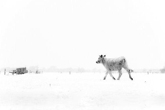 Winter wanderer van Beitske Kempenaar