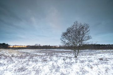 Boom in winters landschap van Marcel Kerdijk
