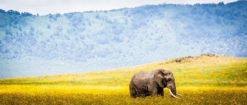Ngorongoro Olifant  van Leon van der Velden