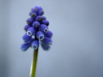 Frühling blau von Veerle Addink