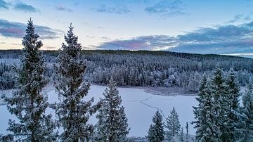 Natuurgebied in zweden von Fields Sweden