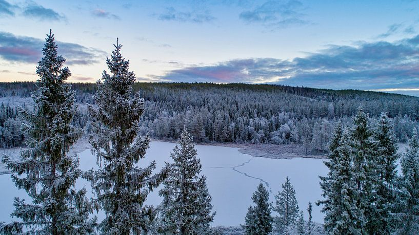 Natuurgebied in zweden van Fields Sweden