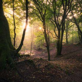 Een mooie ochtend in het bos van Edwin Mooijaart