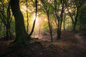 Een mooie ochtend in het bos