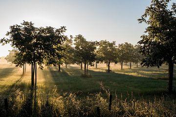 Sonnenstrahlen scheinen durch einen Obstgarten. von Arthur Puls Photography