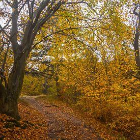Couleurs d'automne dans la forêt sur Martijn Tilroe