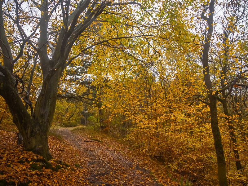 Herbstliche Farben im Wald von Martijn Tilroe