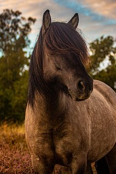 Wildes Pferd, Posbank von Nynke Altenburg