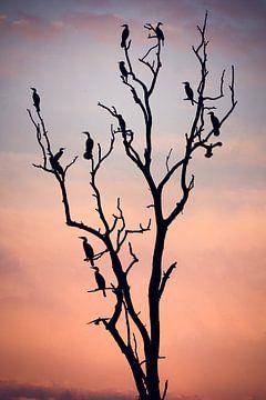 Vor dem Sonnenuntergang, Niklas Rosenkilde von 1x
