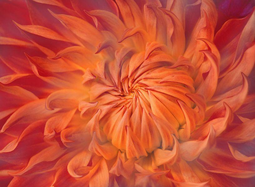 Flame van Jacky Gerritsen