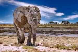Elefant auf Streiftour in Namibia von W. Woyke