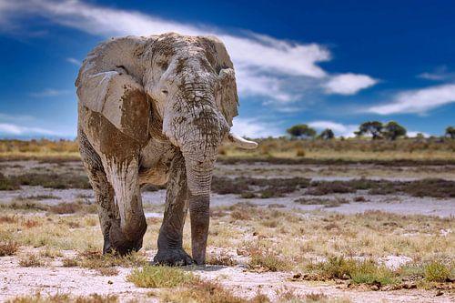 Elefant auf Streiftour in Namibia