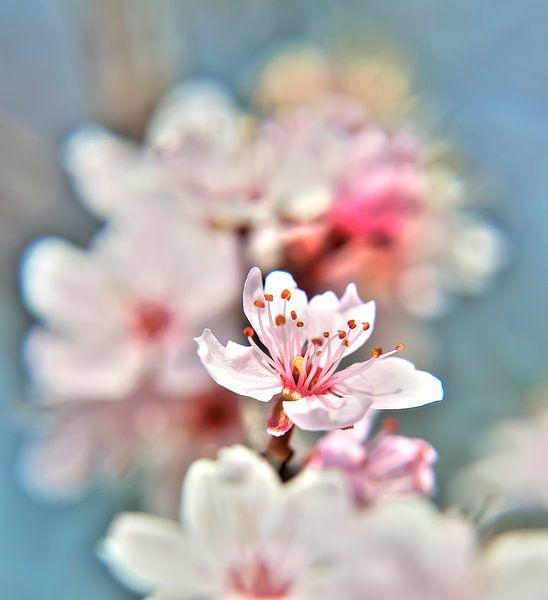 bloesem close up van Alex Hiemstra