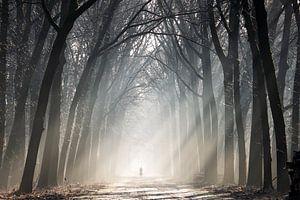 Fietser in een bos met zonnestralen van